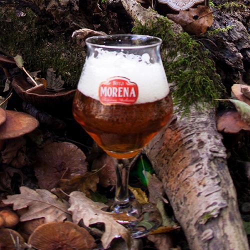 Gran Riserva Lucana 33cl cassa da 12 pz -14 % alc. vol. - Craft Beer